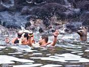 nadando con lobos marinos en Lima Perú