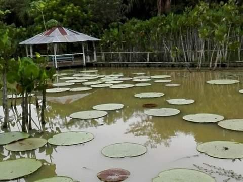 Iquitos Típico - 3d/2n