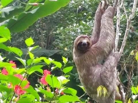 Iquitos Encantado - 4d / 3n