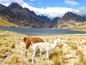 Foto de Huaraz Full Day - Laguna de Querococha/Templo de Chavin