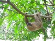 Foto de Iquitos Mágico - 4 Días de Pura Selva