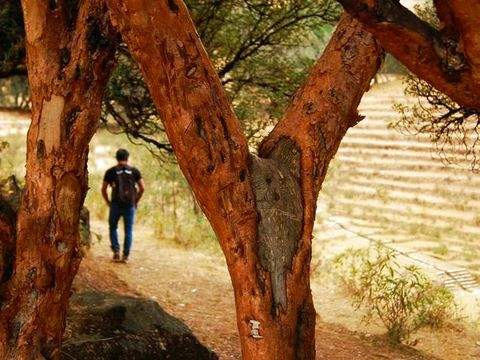 """Trekking to the """"Golden Forest of the Incas"""""""