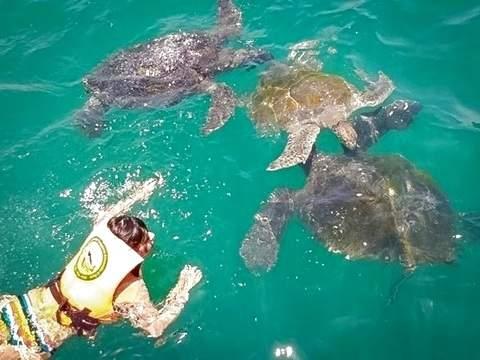 4d/3n Tour Playas del Norte + Nado Con Tortugas + Hostal 2*