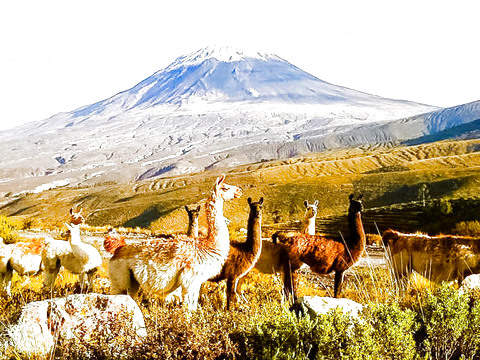 Tour to the Colca Valley - 2d / 1n