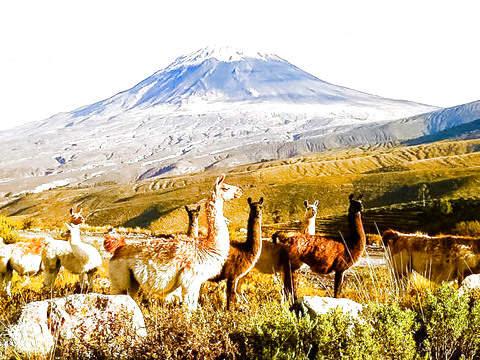 Tour al Valle del Colca - 2d/1n