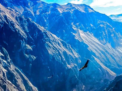 Colca Todo Incluido: Vuelo del Cóndor en Arequipa