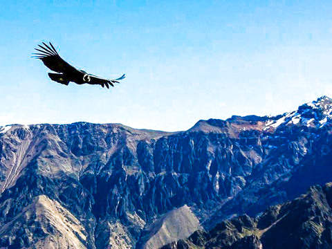 Arequipa - Colca - Puno