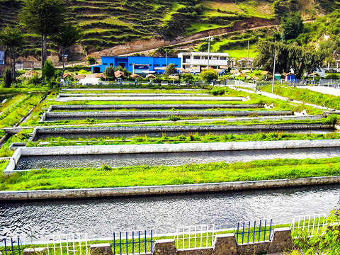 Full Day - Ingenio (Largest Trout Farm in Peru)