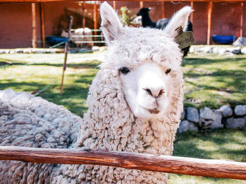 Tour Arequipa - Countryside and City by Tourist Bus