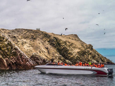 Ballestas Islands Tour - Half Day
