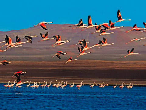 Full Day South of Lima: Ballestas-Paracas-Huacachina Islands