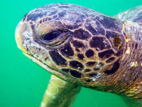 Snorkeling Con Tortugas