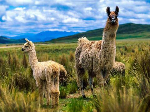 Tour Completo Ruta del Sol: Arequipa + Puno + Cusco - 7d/6n