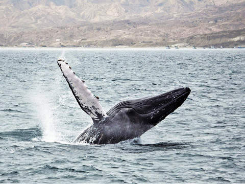 Marine Tours: Whale Watching and Bathing with Turtles