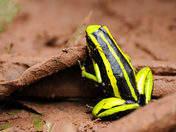 Fauna en carpishuyacu