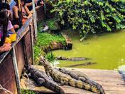 Fundo de lizards
