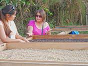 Ingreso a Fincas Cafetaleras en Villa Rica