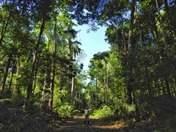 explora la selva